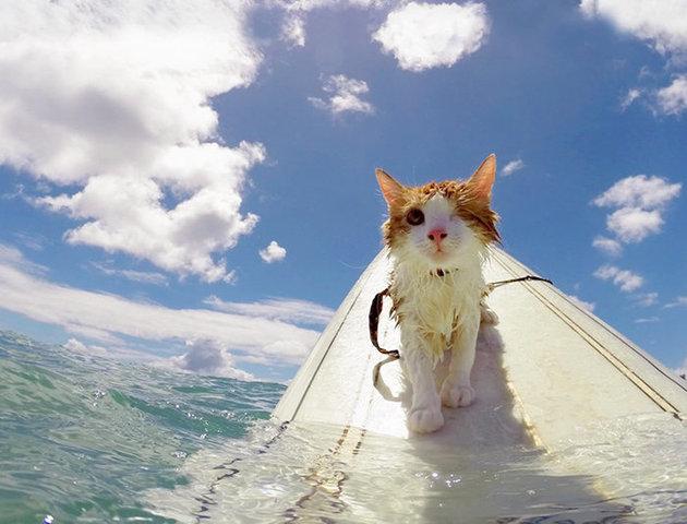 CatersTV kitty